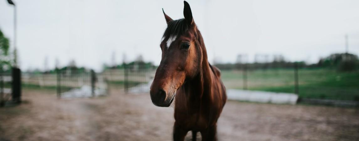 Bydło i konie