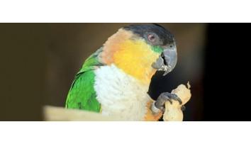Zwierzęta egzotyczne i ptaki